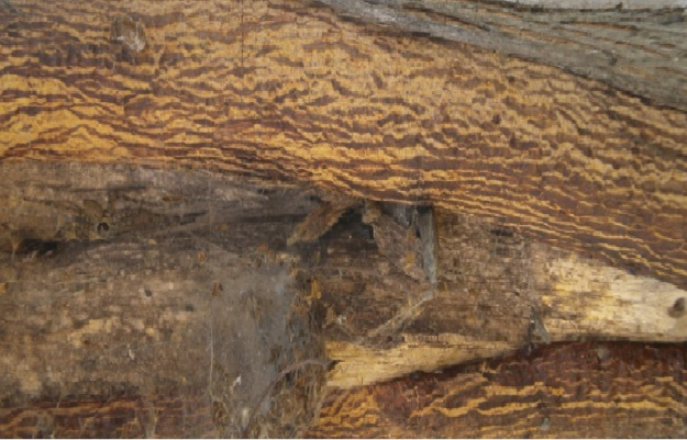 kulit pohon 1