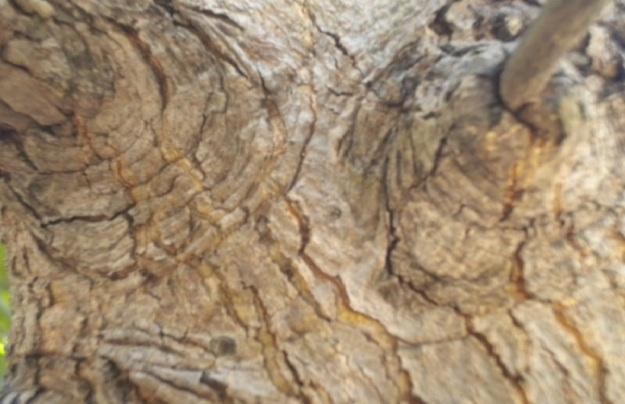 kulit pohon10