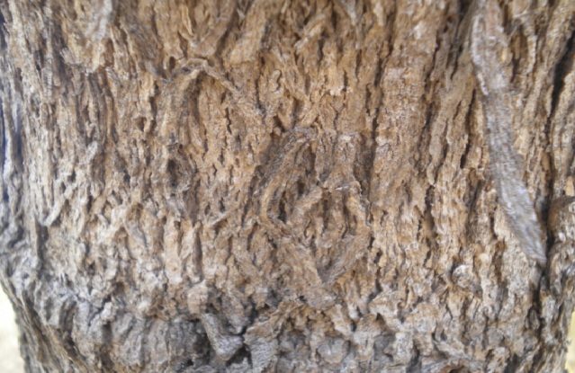 kulit pohon13