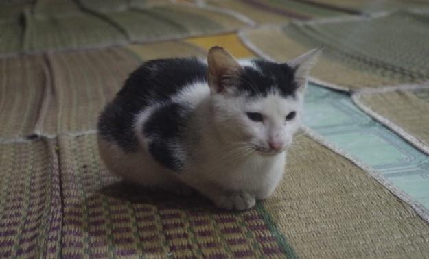 kucing 3