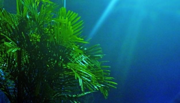 Cahaya daun