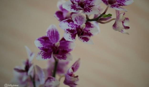 Cinta bunga 3