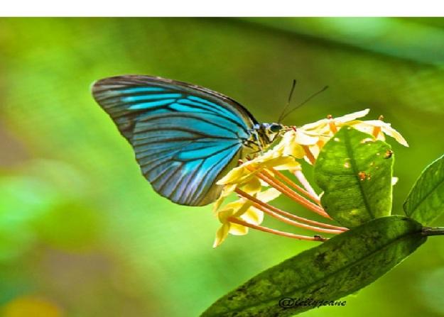 kupu - kupu indah 2