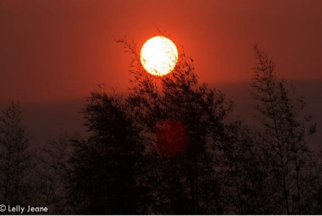 matahari dan bamboo 1
