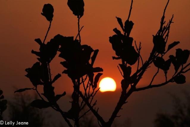 matahari dan bamboo 2