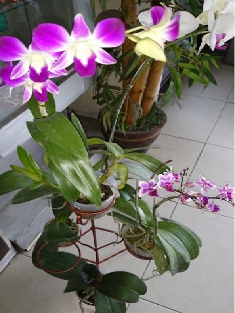 tanaman baru1