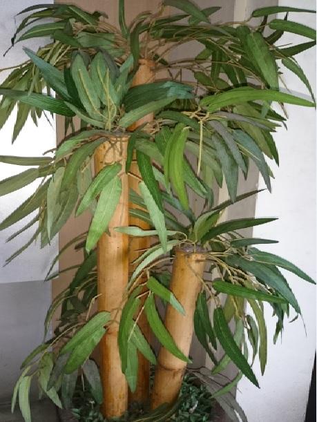 tanaman baru2