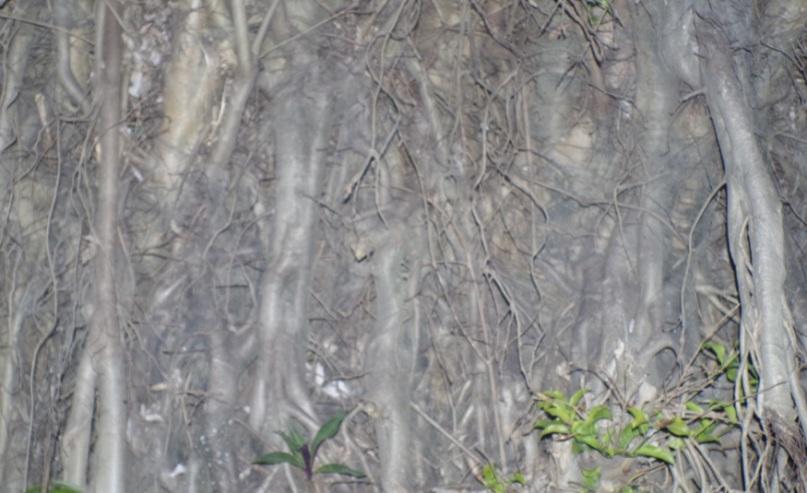 akar besar5