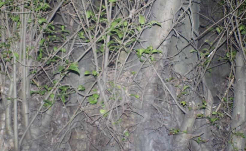 akar besar9