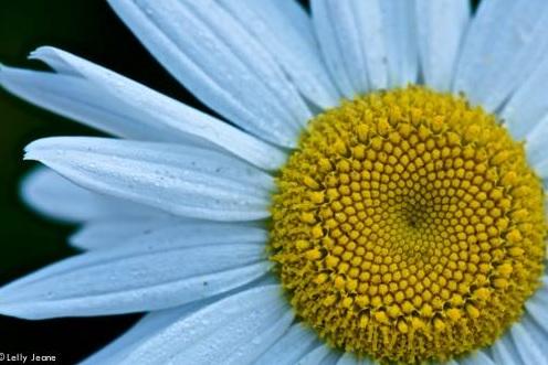 flower lelly jeane 1