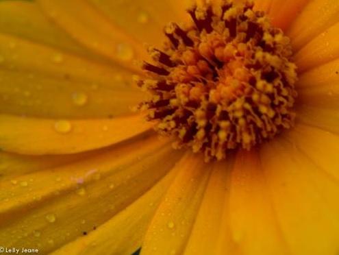 flower lelly jeane 5