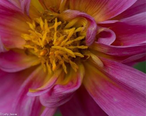 flower lelly jeane 6
