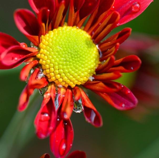 flower lelly jeane2