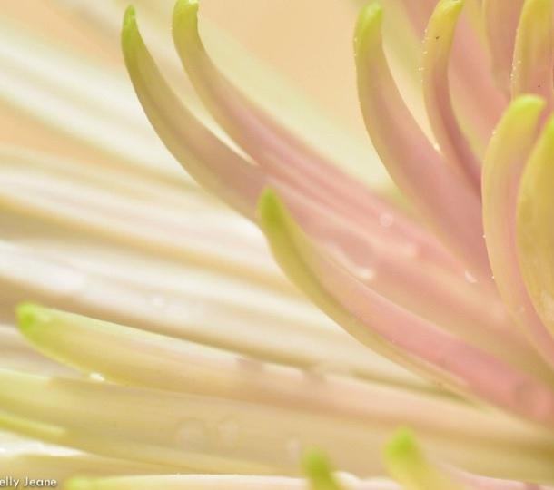 flower lelly jeane6
