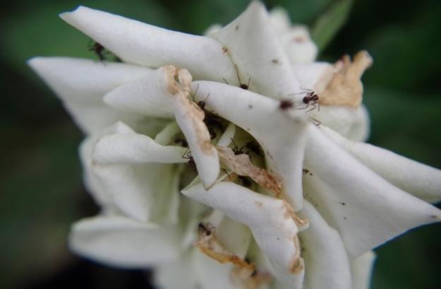 flower molina10