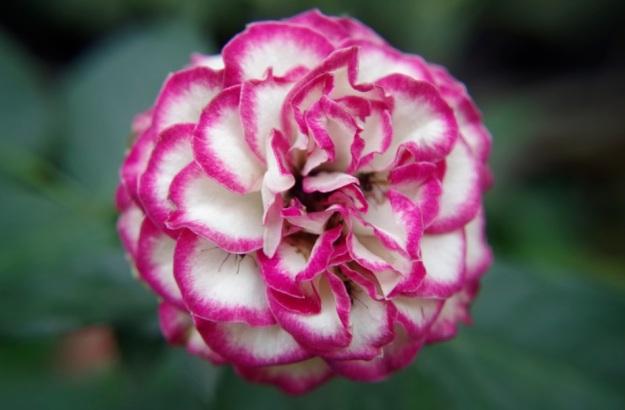 flower molina12