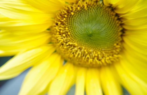 flower molina2
