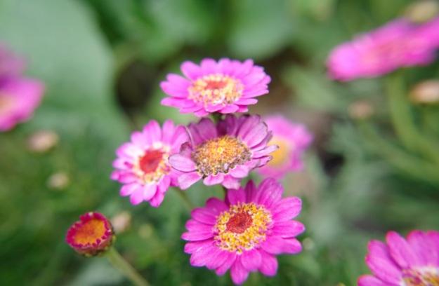 flower molina4