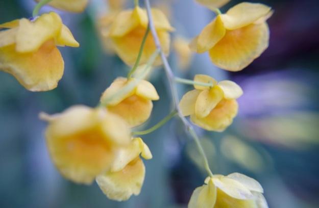 flower molina5