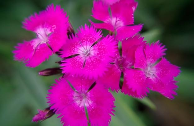 flower molina6