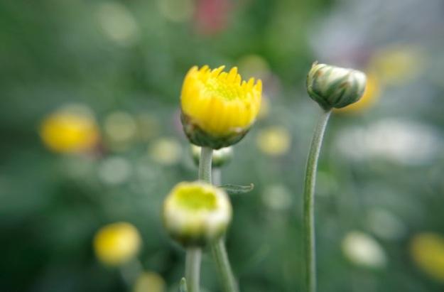 flower molina8