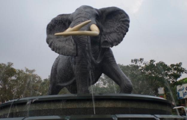 gajah molina1