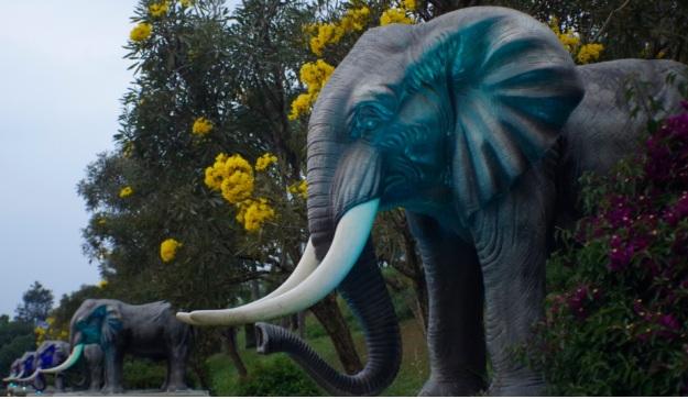 gajah molina3