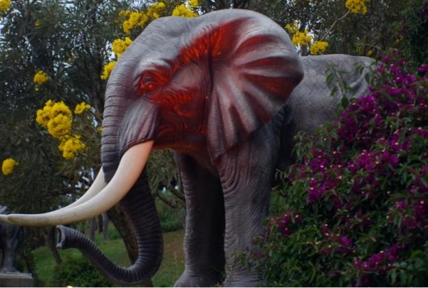 gajah molina5
