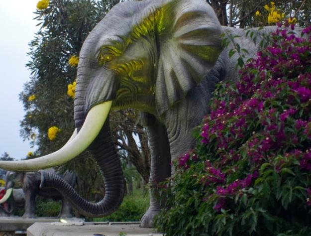 gajah molina6