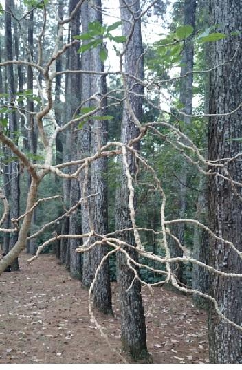 hutan 1
