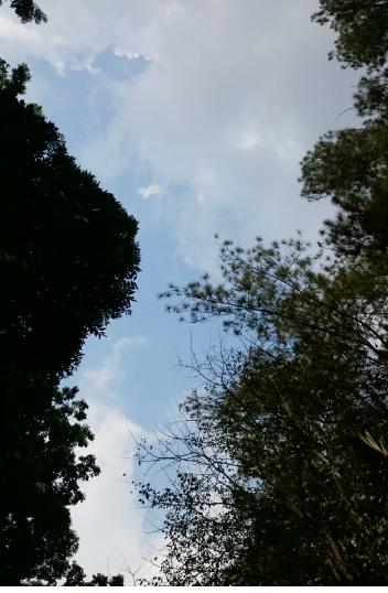 hutan 13