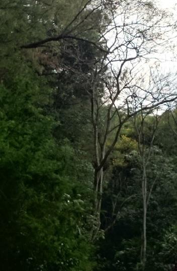 hutan 14