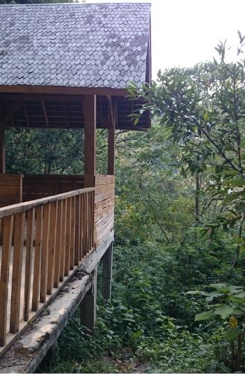 hutan 15