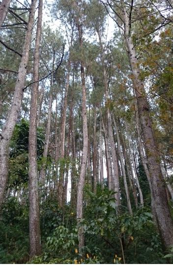 hutan 16