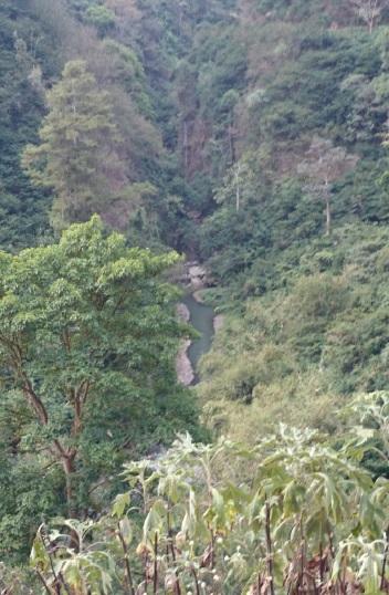 hutan 18
