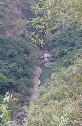 hutan 19