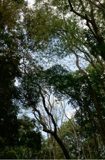 hutan 2