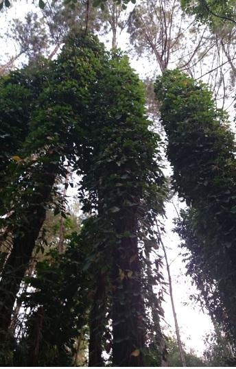 hutan 21