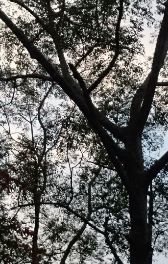 hutan 22