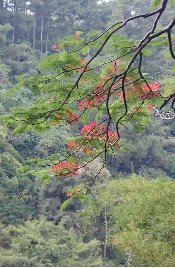 hutan 4