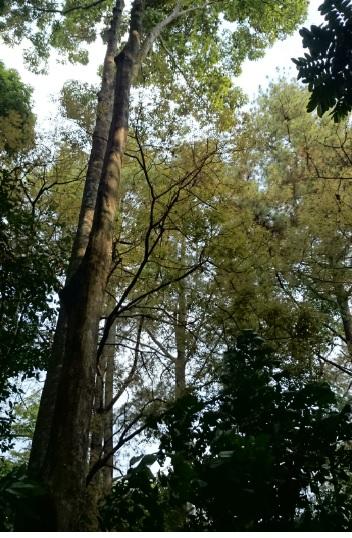 hutan 7
