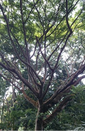 hutan 8