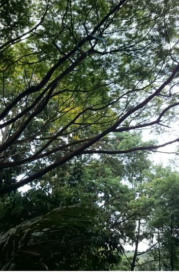 hutan 9