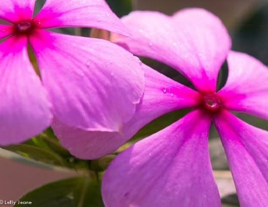 Koleksi 7 oct bunga 1