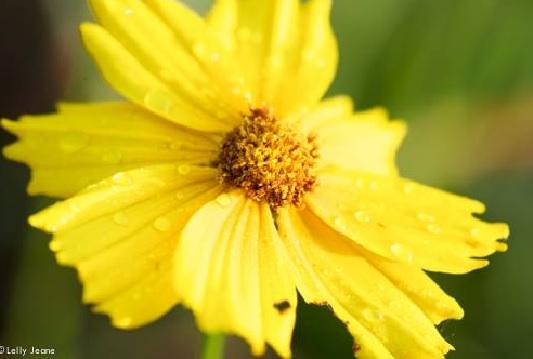 Koleksi 7 oct bunga 8