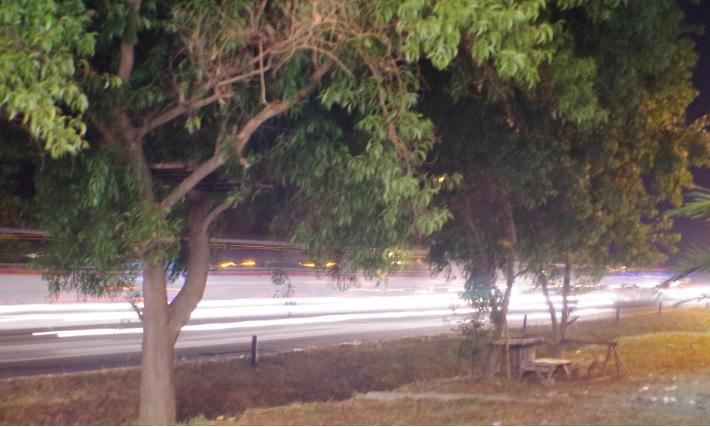pohon dipinggir tol1