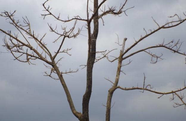 Pohon itu 5