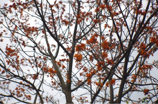 Pohon itu 6