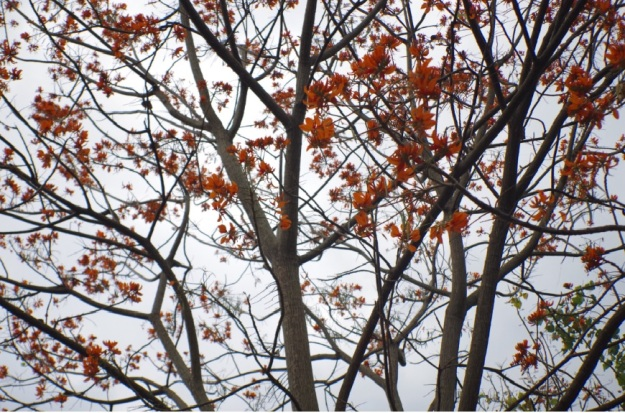 Pohon itu 7