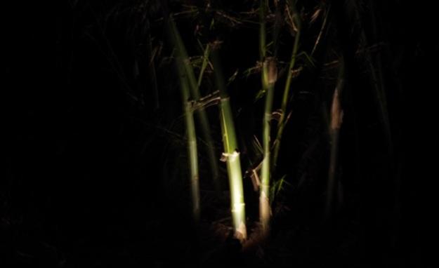 lampu12